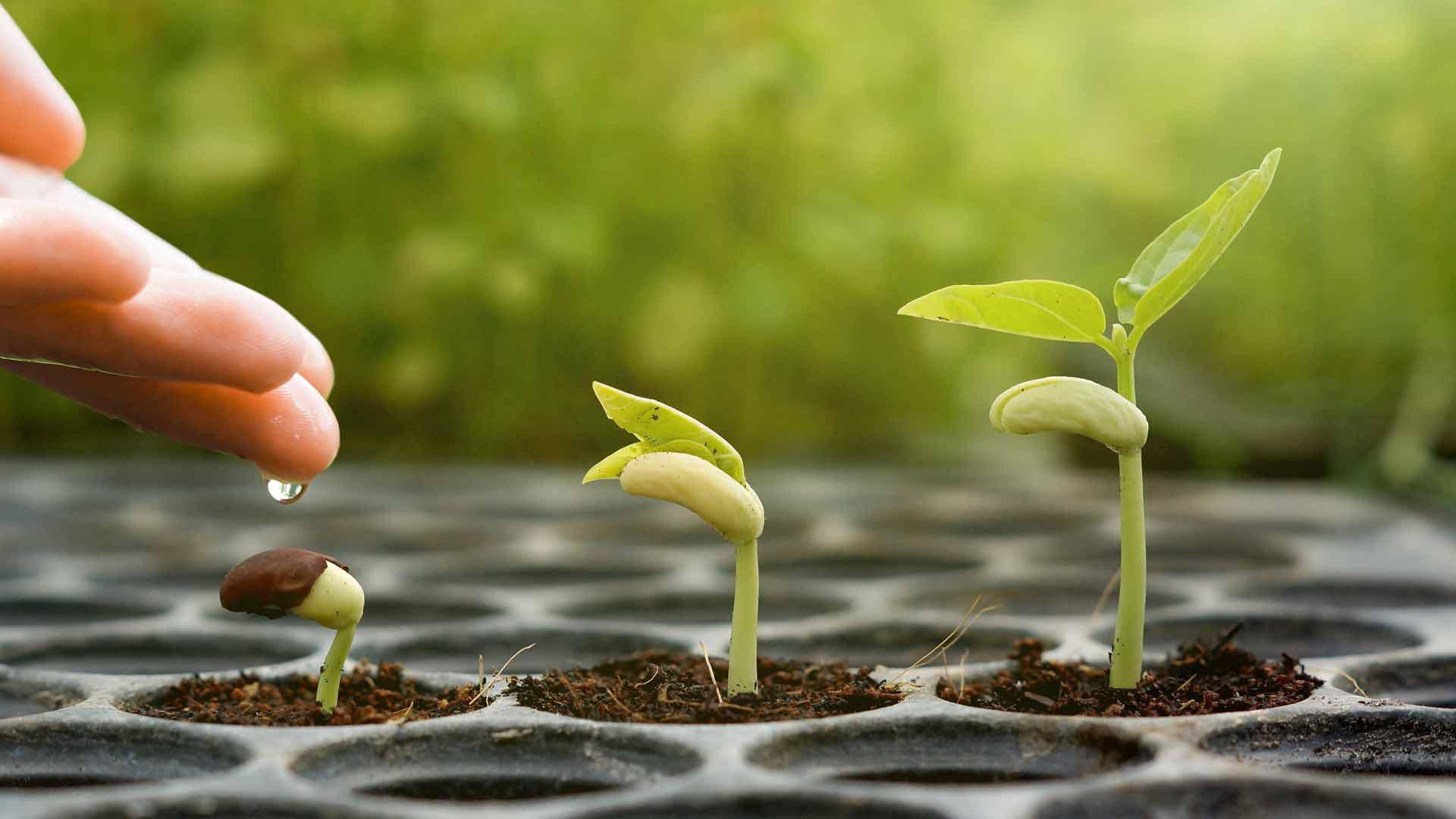 Хөрсний чийгшилтийг зохицуулна, хэмжээг хэтрүүлэн хэрэглэснээр ургамал, хөрсөнд ямарч муу нөлөөгүй