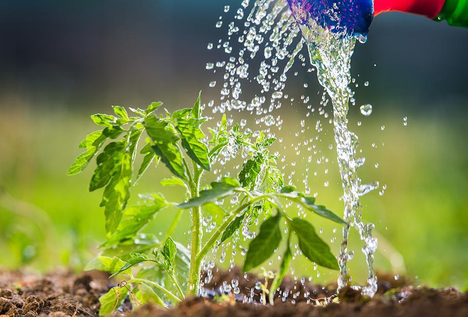 Wasser absorbierende Wirkung
