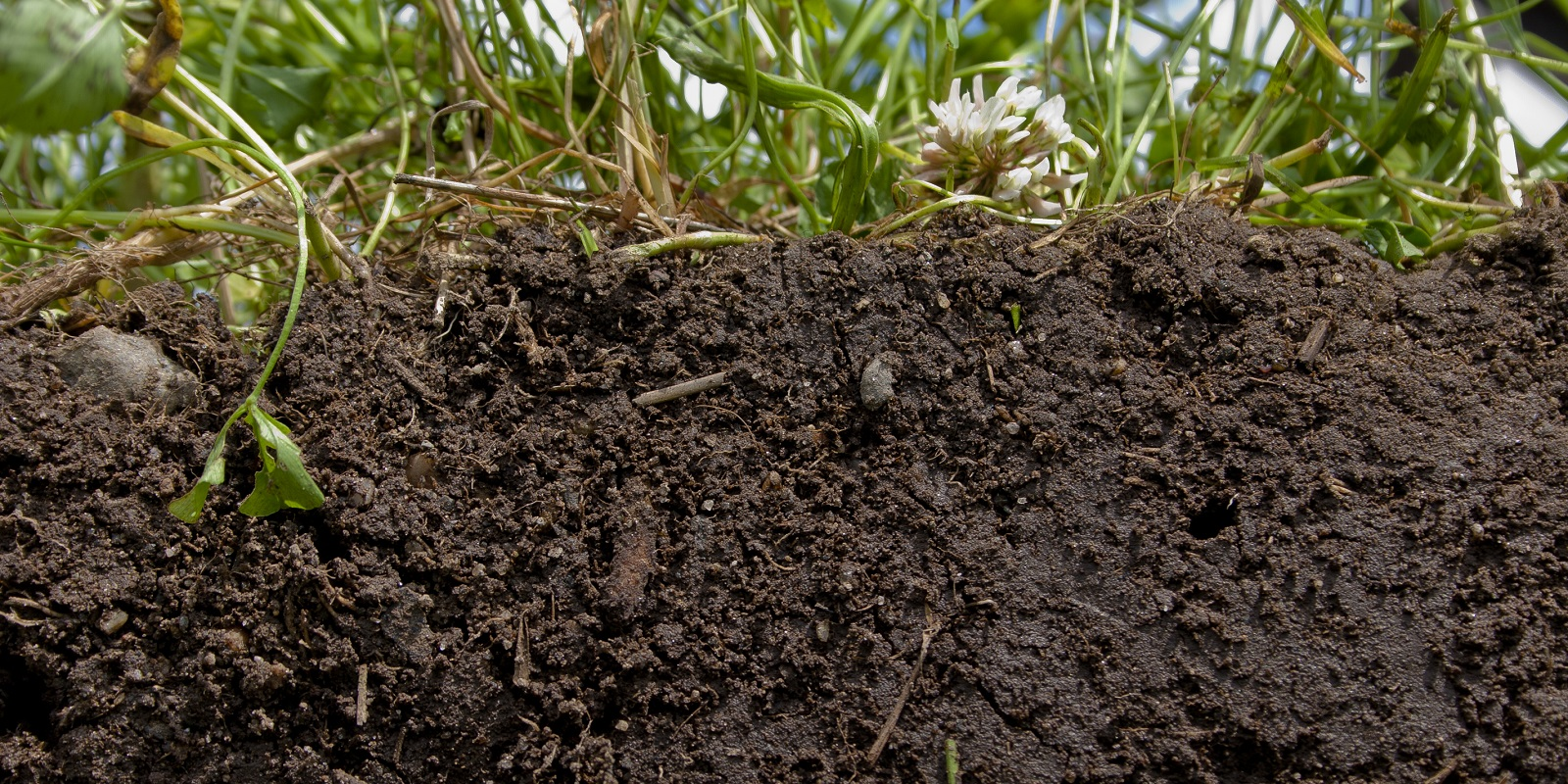 Swell effect, improves soil structure